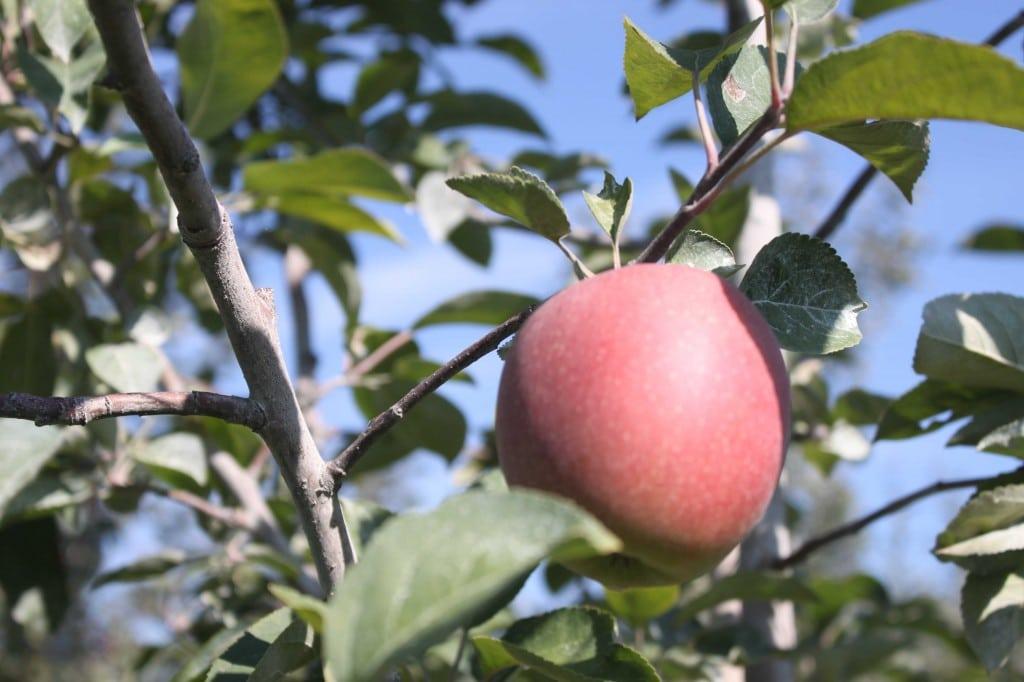 Humble Apple Pie Crumble by @JesseLWellness #apple