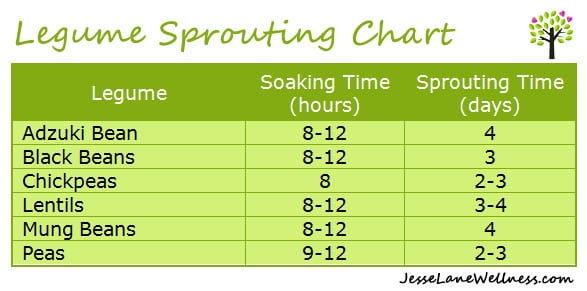 How to Sprout Beans - Legume Sprouting Chart by @jesselwellness #sprouting #beans #legumes