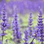 Summertime Essential Oils by Jesse Lane Wellness