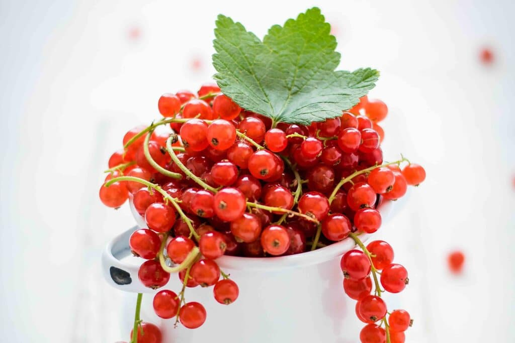 July Farmer's Market Finds - currants