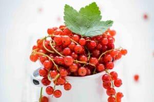 July-Farmers-Market-Finds-Currants-on-Jesse-Lane-Wellness